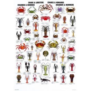Krabber og Hummere