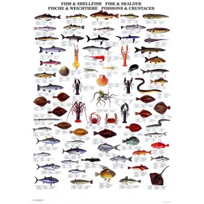 Fisk & Skaldyr