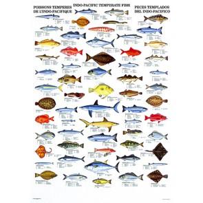 Tempererede Fisk fra Indo-Pacific