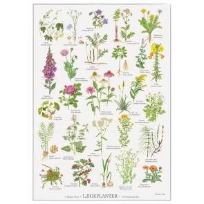Lægeplanter - Plakat