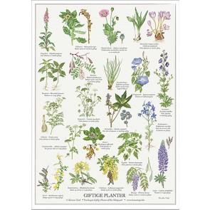 Giftige planter - plakat