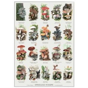Spiselige svampe - plakat