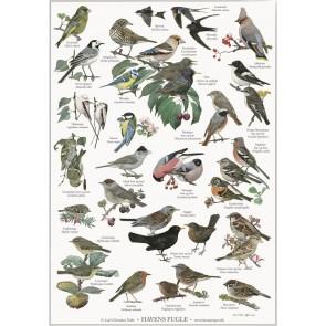 Havens Fugle - plakat