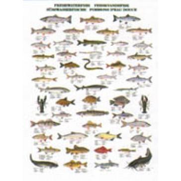 Ferskvandsfisk