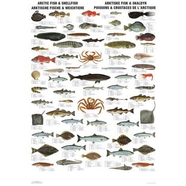 Arktiske fisk og skaldyr