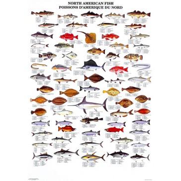 Nordamerikanske Fisk