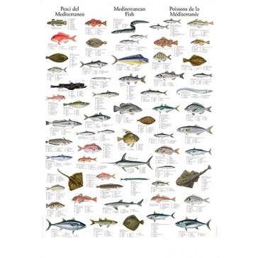 Middelhavets Fisk