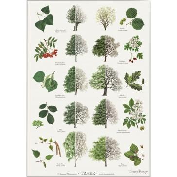 Træer - plakat