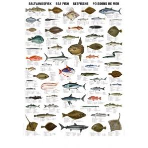Saltvandsfisk