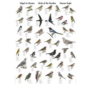 Havens Fugle - udsolgt (ingen dato)