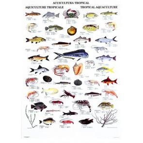 Tropisk Akvakultur