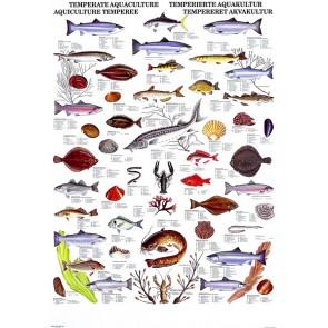 Tempereret Akvakultur