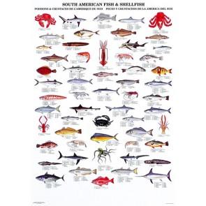 Sydamerikanske Fisk og Skaldyr