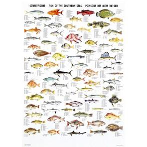 Fisk fra de Sydlige Have