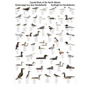 Kystfugle fra Nordatlanten