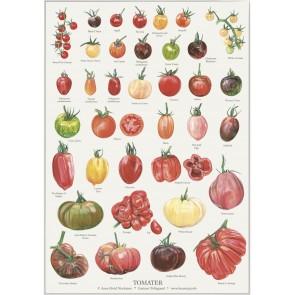 Tomater - plakat
