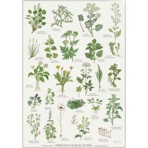 Spiselige vilde planter - plakat
