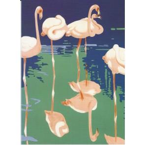 Flamingoes at the zoo